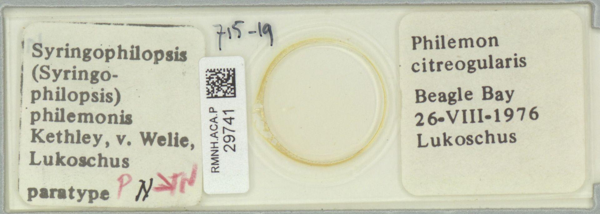 RMNH.ACA.P.29741 | Syringophilopsis (Syringophilopsis) philemonis Kethley, v. Welie, Lukoschus