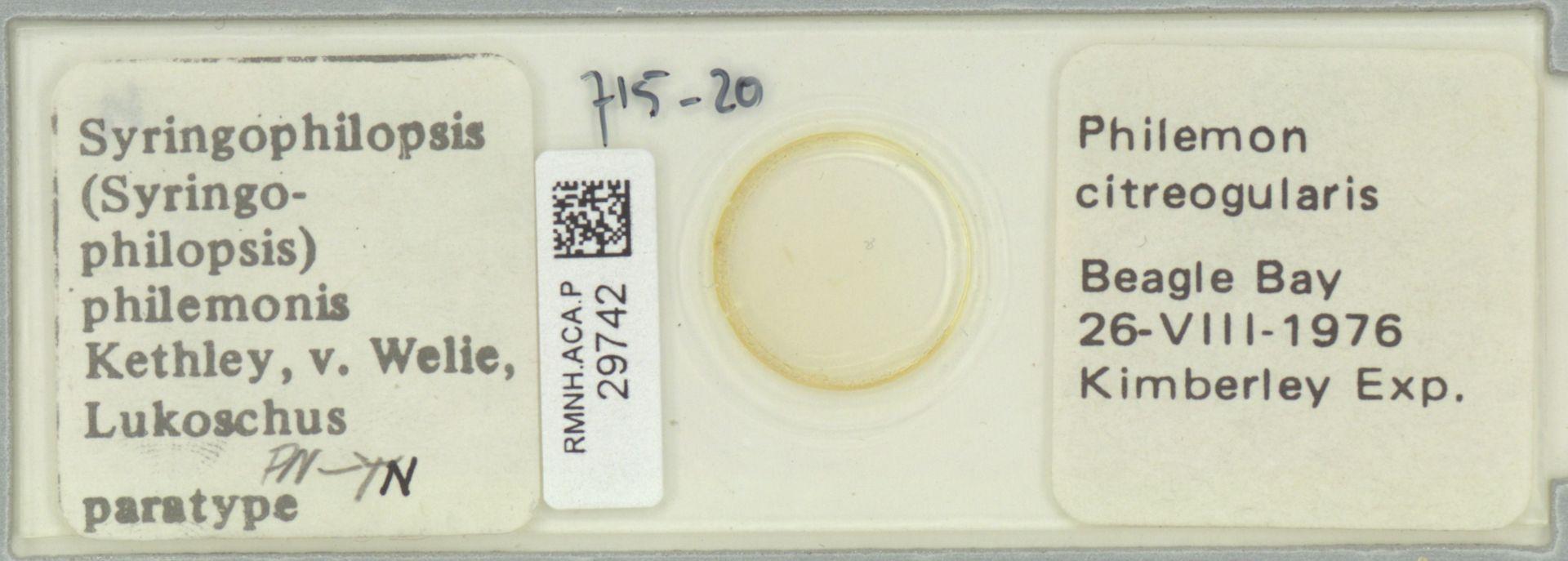 RMNH.ACA.P.29742   Syringophilopsis (Syringophilopsis) philemonis Kethley, v. Welie, Lukoschus