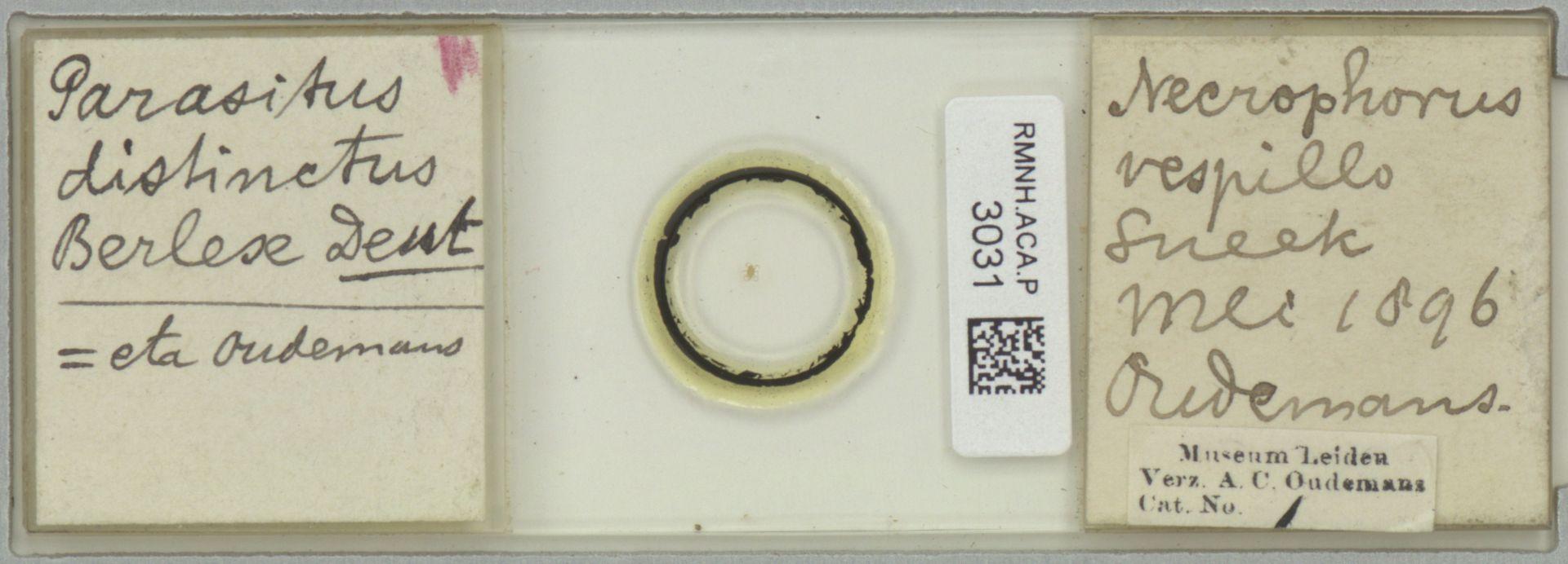 RMNH.ACA.P.3031 | Parasitus distinctus Berlese, 1903