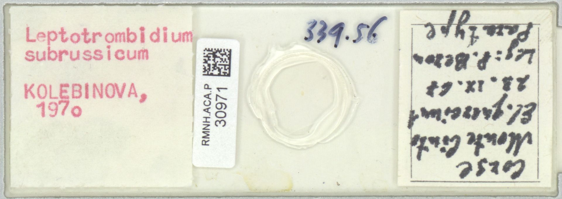 RMNH.ACA.P.30971 | Leptotrombidium subrussicum Kolebinova 1970