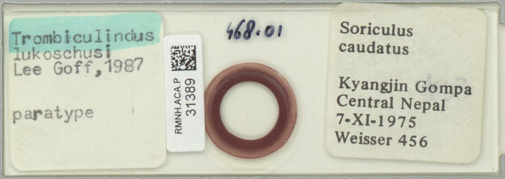 RMNH.ACA.P.31389 | Trombiculindus lukoschusi Lee Goff, 1987