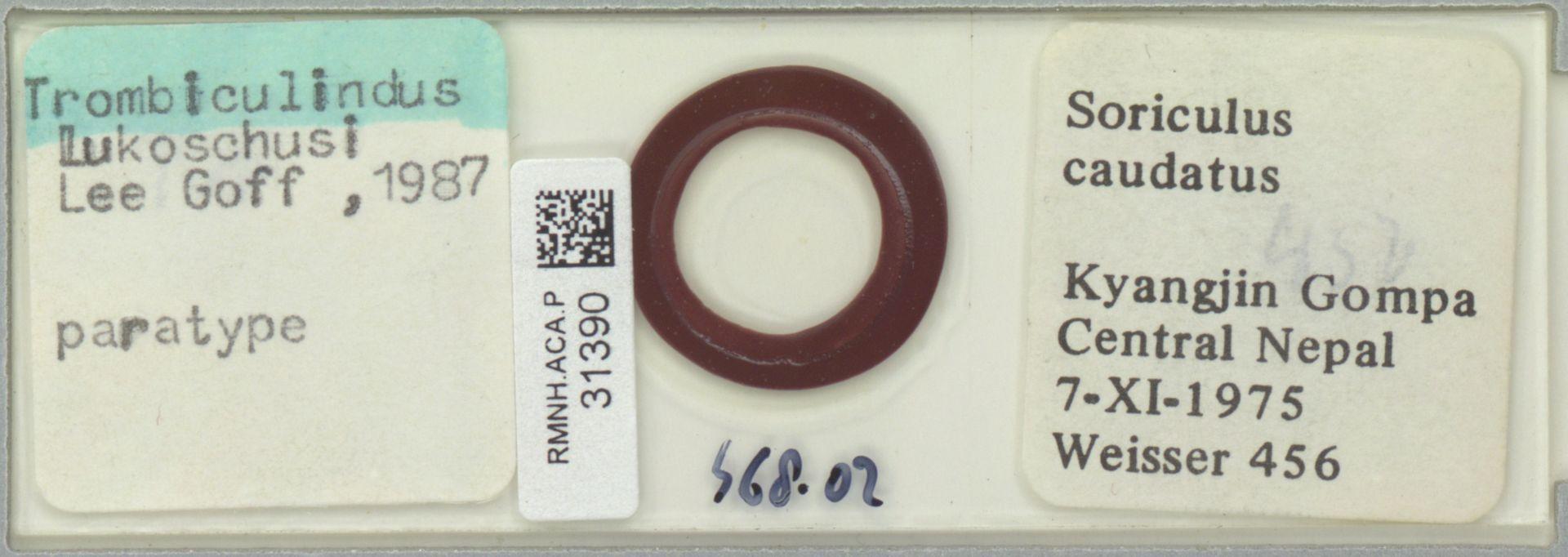 RMNH.ACA.P.31390   Trombiculindus lukoschusi Lee Goff, 1987