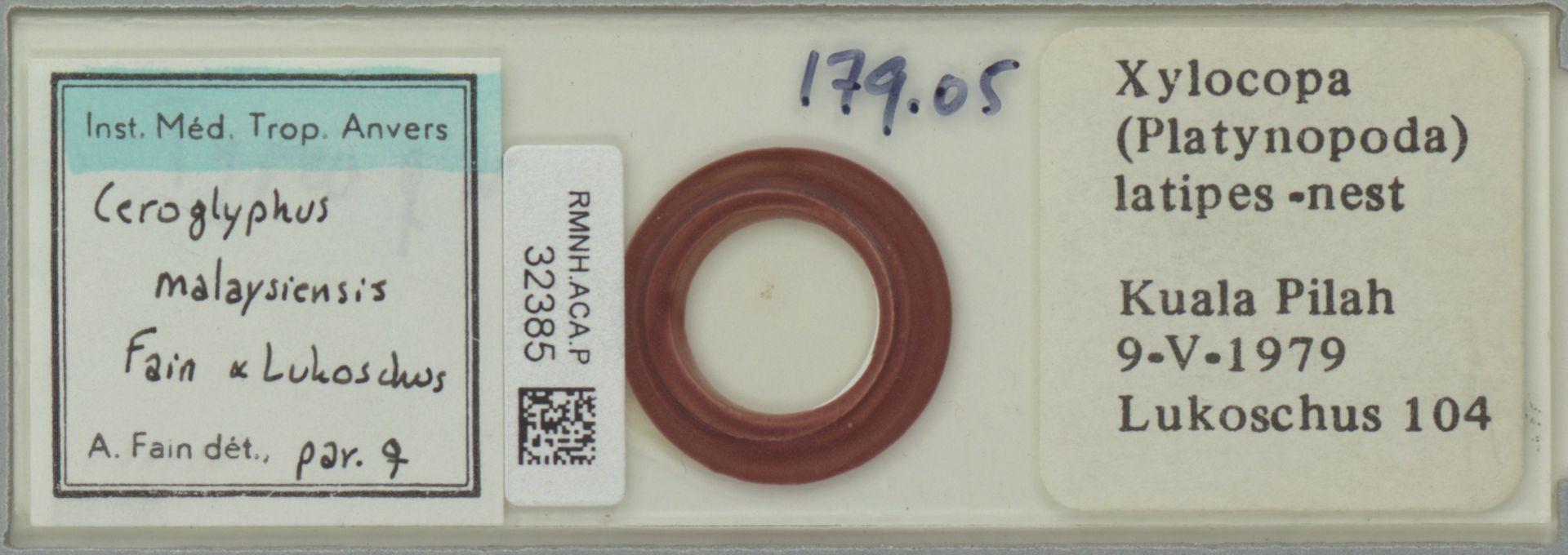 RMNH.ACA.P.32385 | Ceroglyphus malaysiensis Fain & Lukoschus