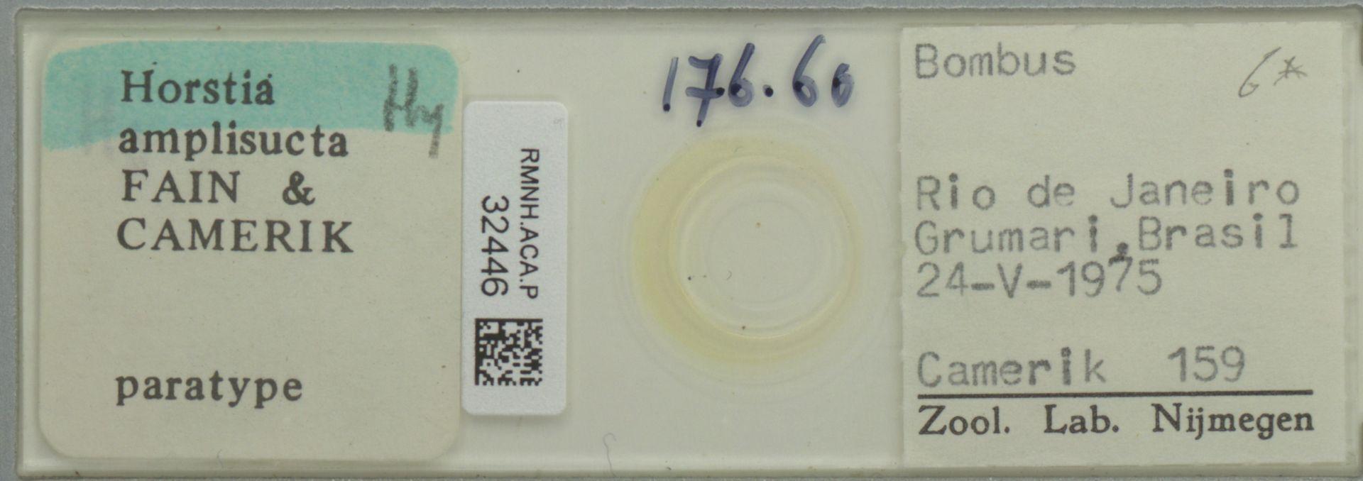 RMNH.ACA.P.32446   Horstia amplisucta Fain & Camerik