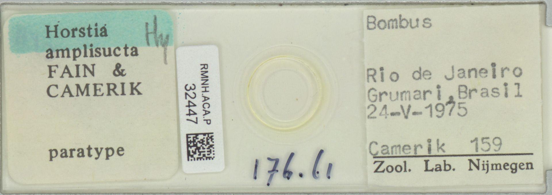 RMNH.ACA.P.32447 | Horstia amplisucta Fain & Camerik