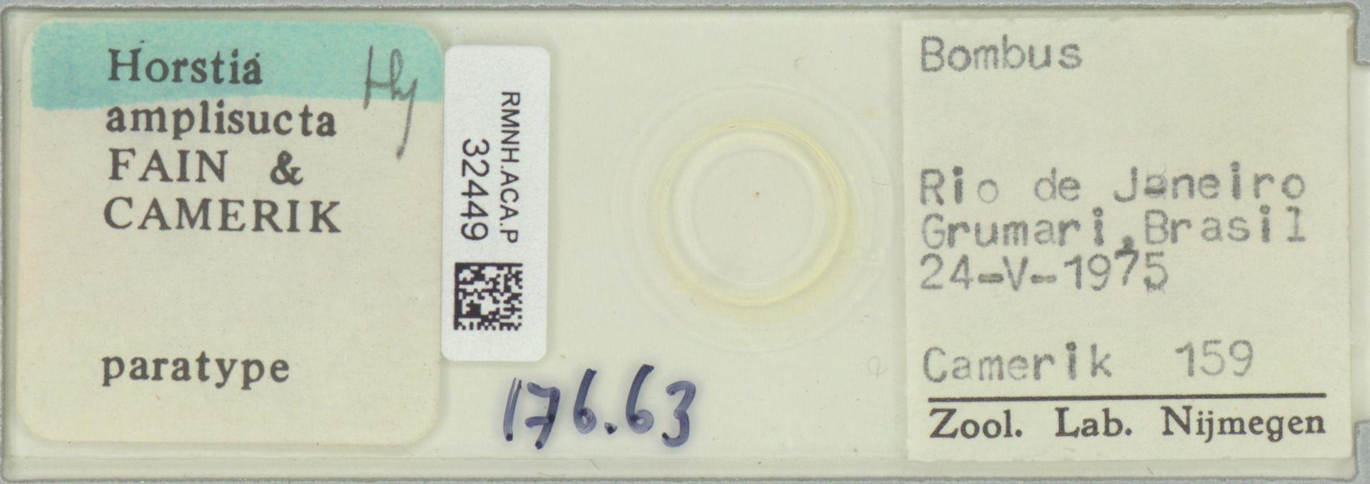 RMNH.ACA.P.32449   Horstia amplisucta Fain & Camerik