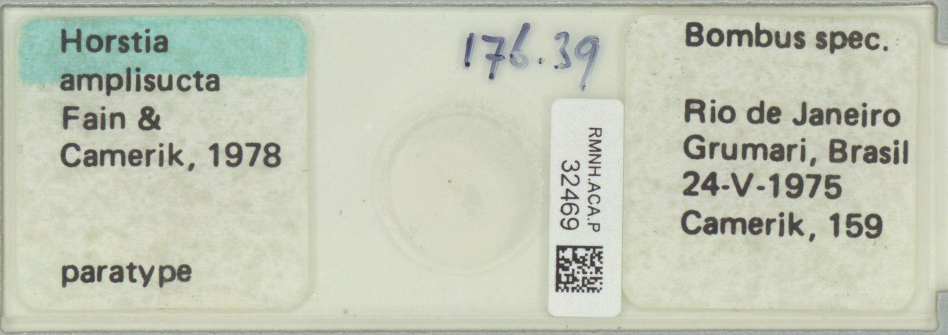RMNH.ACA.P.32469 | Horstia amplisucta Fain & Camerik 1978
