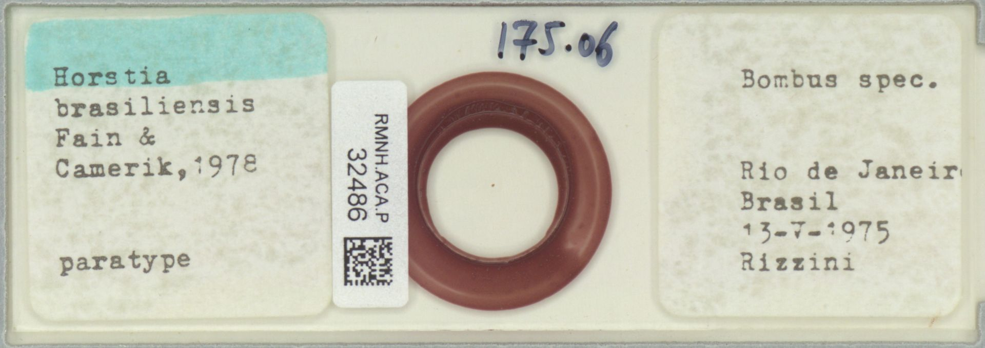 RMNH.ACA.P.32486 | Horstia brasiliensis Fain & Camerik 1978