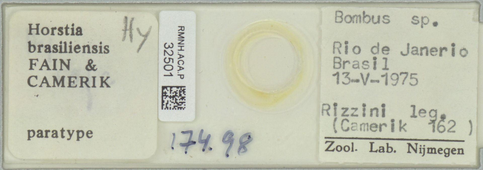 RMNH.ACA.P.32501 | Horstia brasiliensis Fain & Camerik