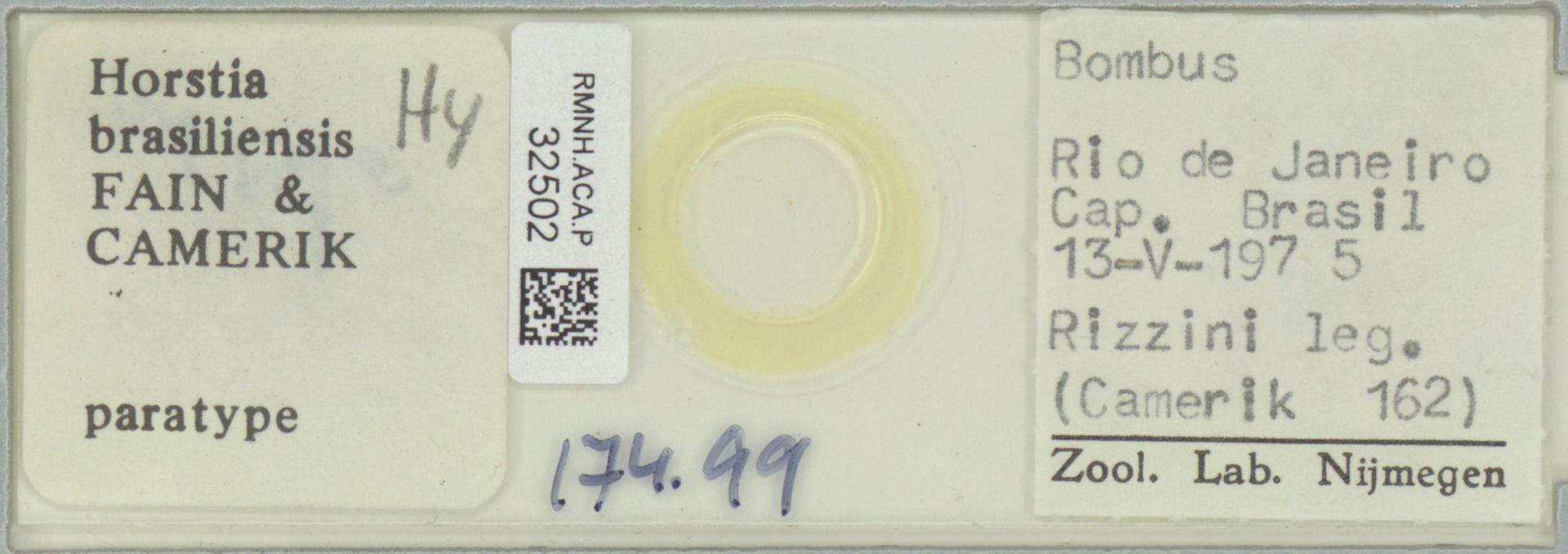 RMNH.ACA.P.32502 | Horstia brasiliensis Fain & Camerik