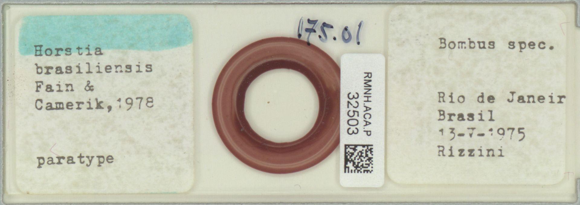 RMNH.ACA.P.32503 | Horstia brasiliensis Fain & Camerik, 1978