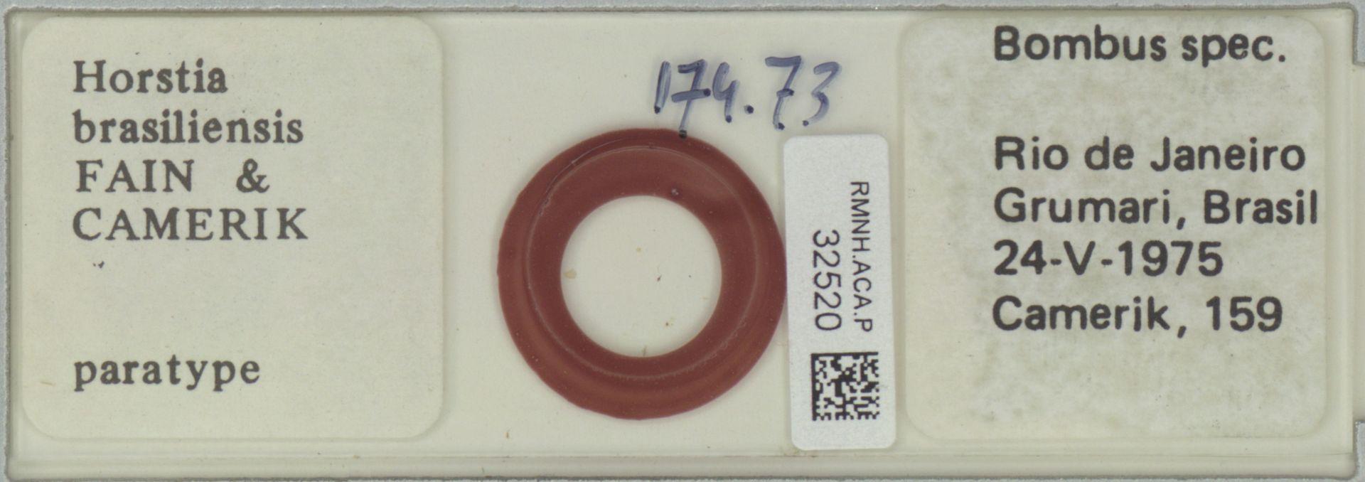 RMNH.ACA.P.32520 | Horstia brasiliensis Fain & Camerik