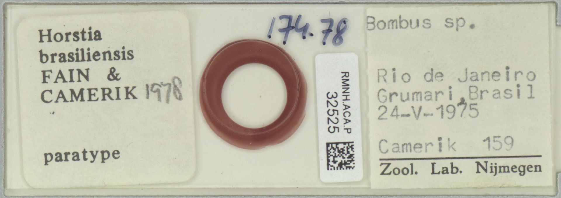 RMNH.ACA.P.32525   Horstia brasiliensis Fain & Camerik 1978