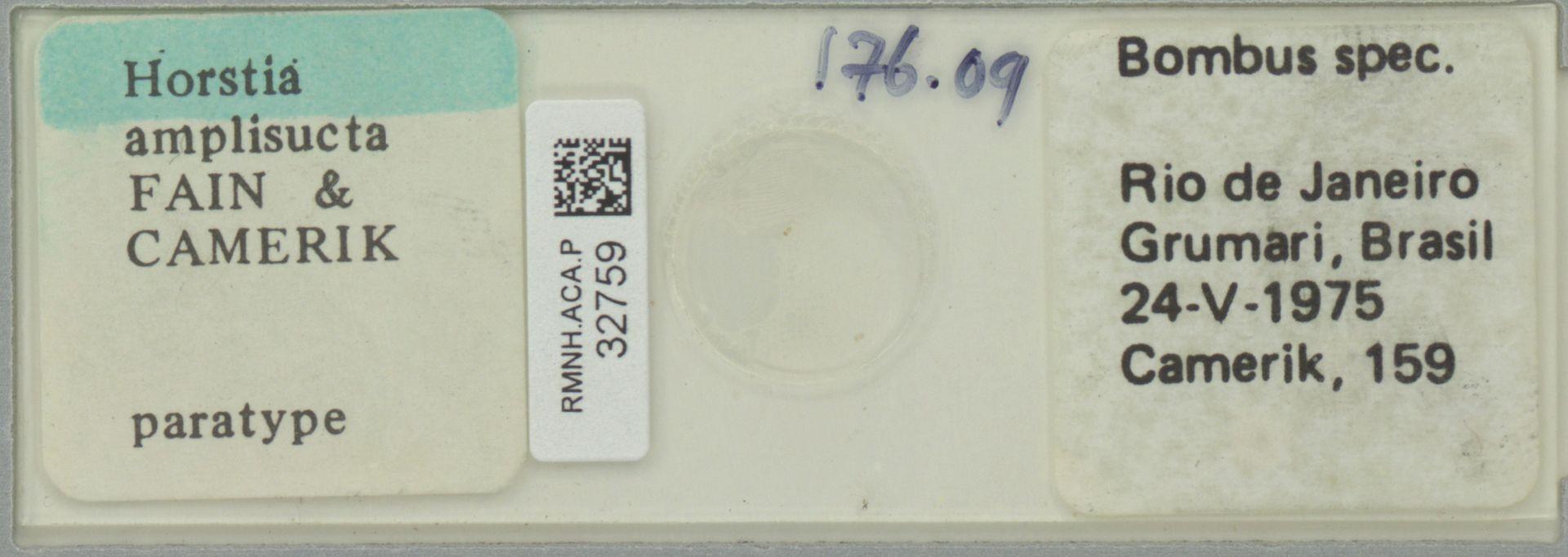 RMNH.ACA.P.32759 | Horstia amplisucta Fain & Camerik