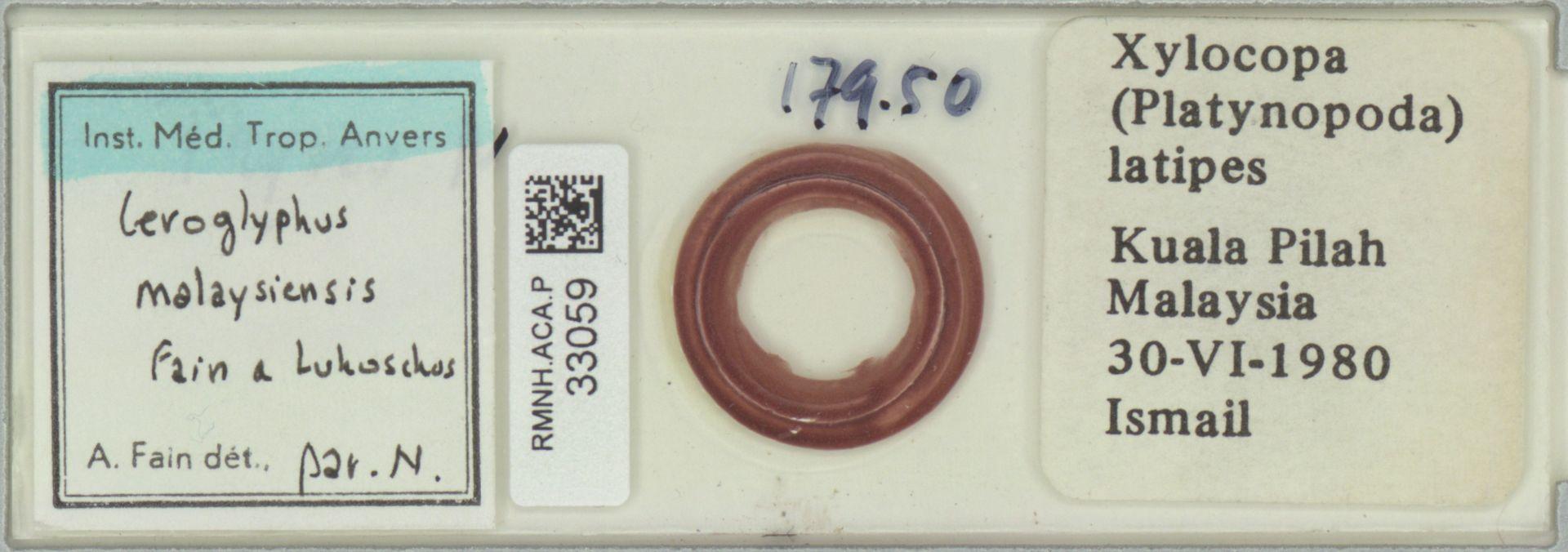 RMNH.ACA.P.33059 | Ceroglyphus malaysiensis Fain & Lukoschus