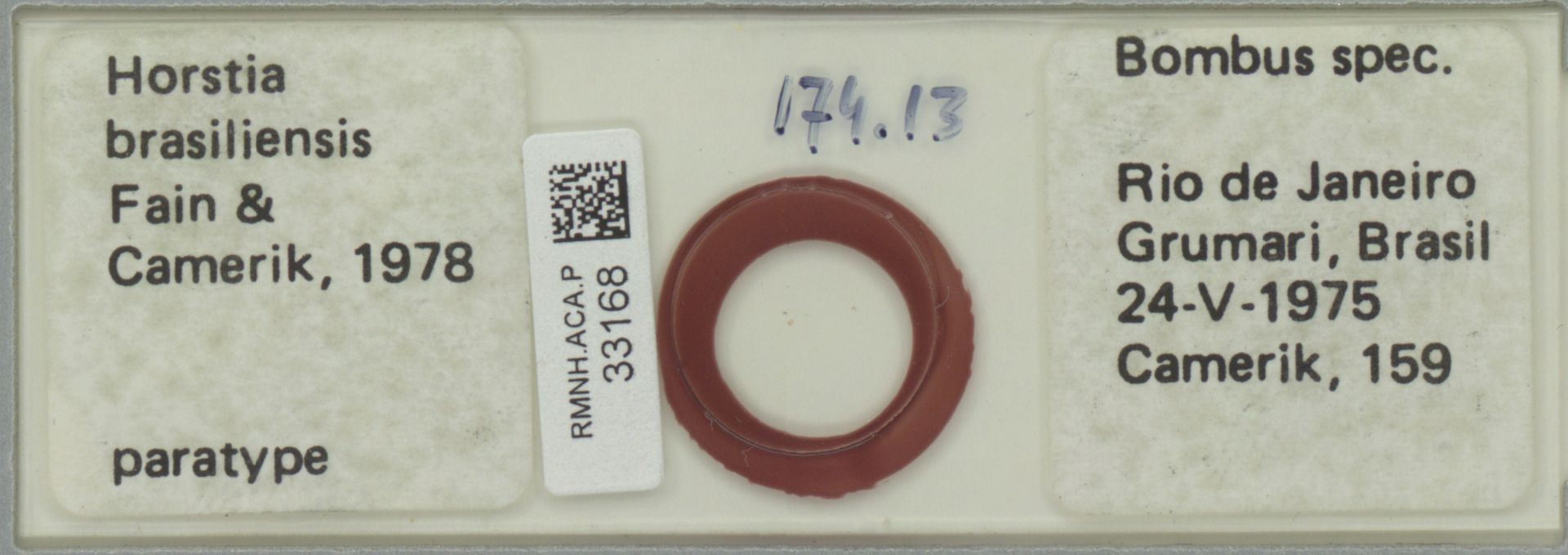 RMNH.ACA.P.33168 | Horstia brasiliensis Fain & Camerik, 1978