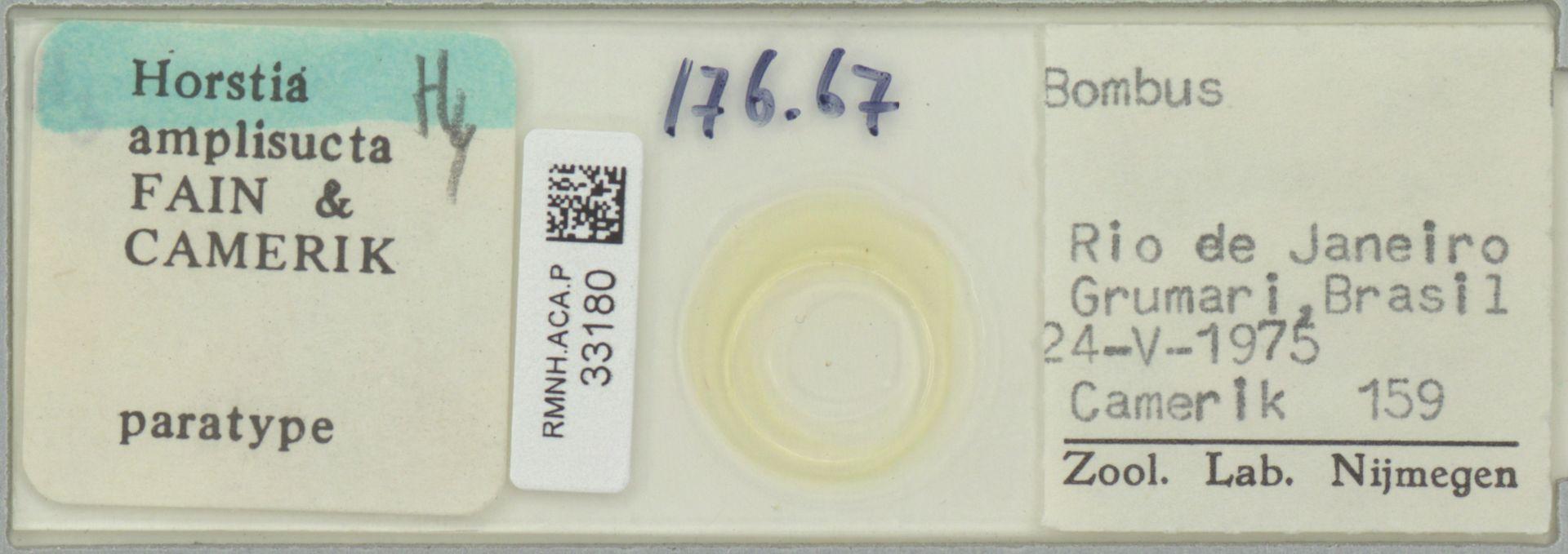 RMNH.ACA.P.33180 | Horstia amplisucta Fain & Camerik
