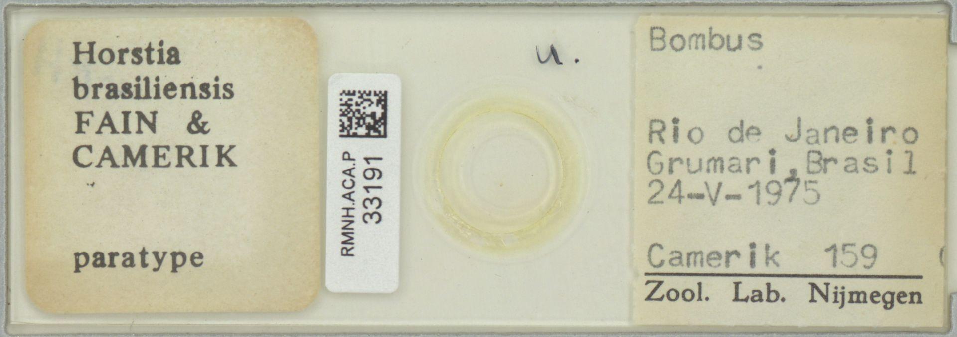 RMNH.ACA.P.33191 | Horstia brasiliensis Fain & Camerik