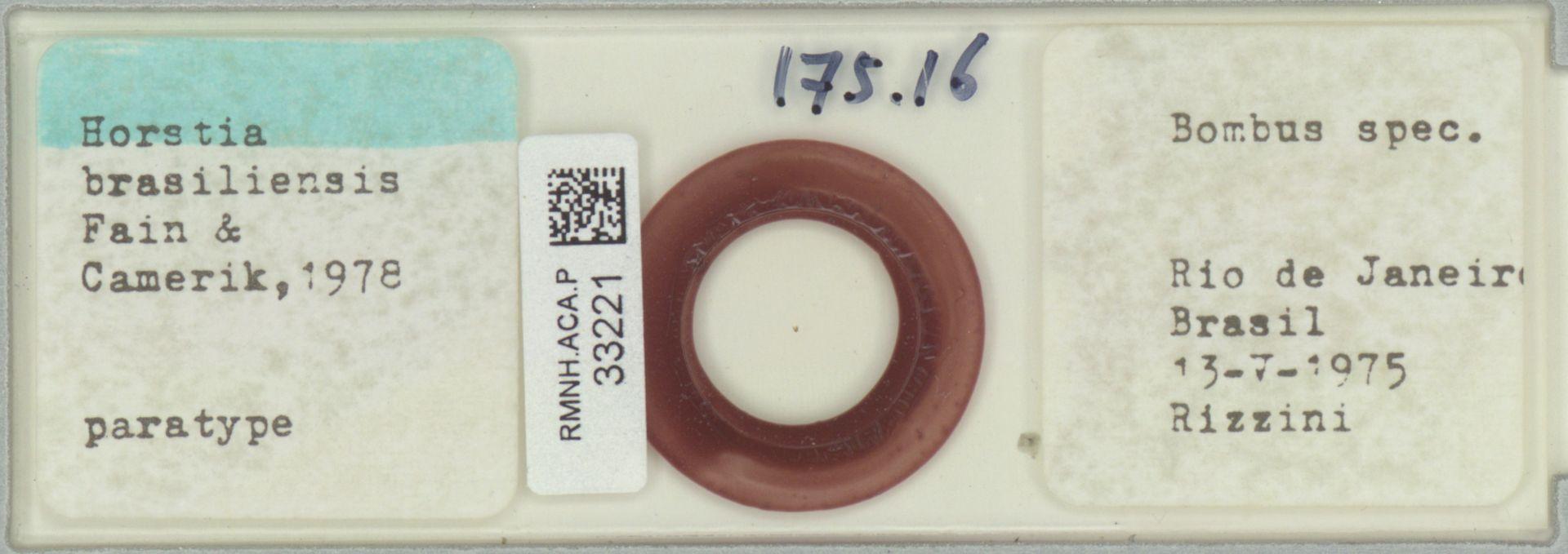 RMNH.ACA.P.33221 | Horstia brasiliensis Fain & Camerik, 1978