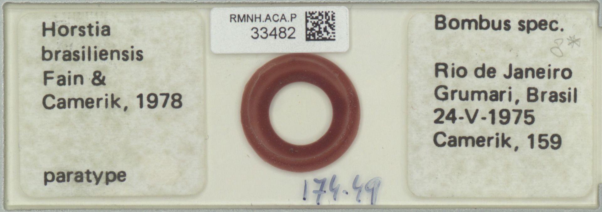 RMNH.ACA.P.33482 | Horstia brasiliensis Fain & Camerik 1978