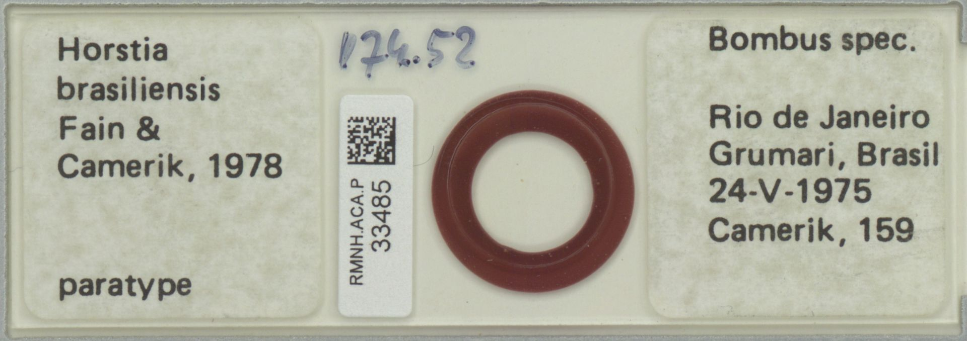 RMNH.ACA.P.33485 | Horstia brasiliensis Fain & Camerik 1978
