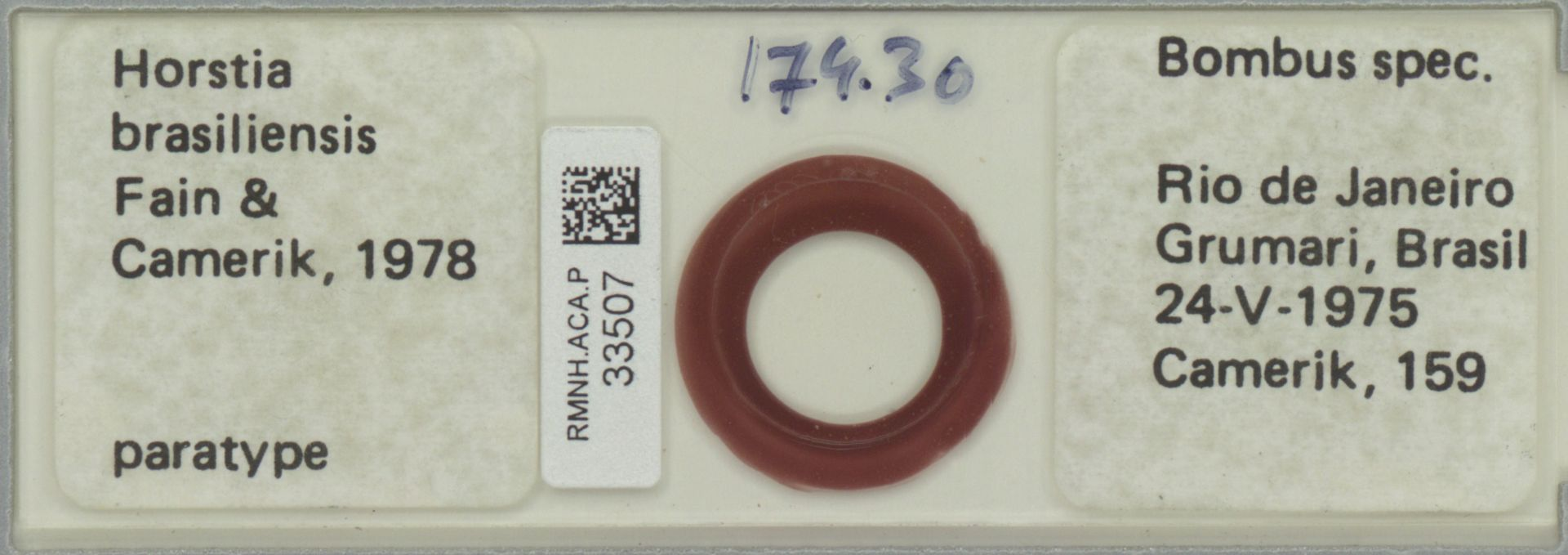 RMNH.ACA.P.33507 | Horstia brasiliensis Fain & Camerik 1978