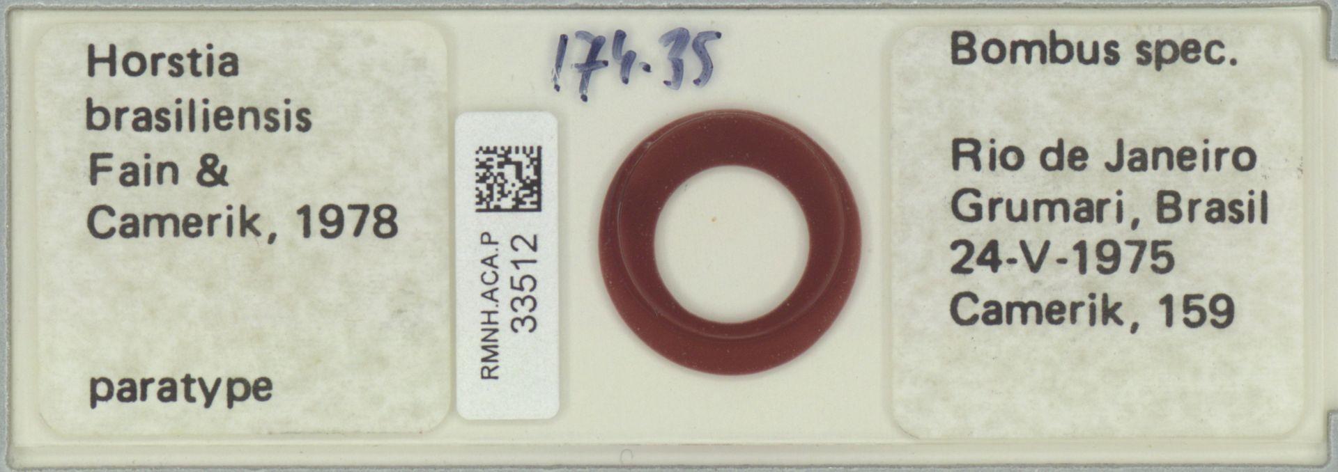 RMNH.ACA.P.33512 | Horstia brasiliensis Fain & Camerik, 1978