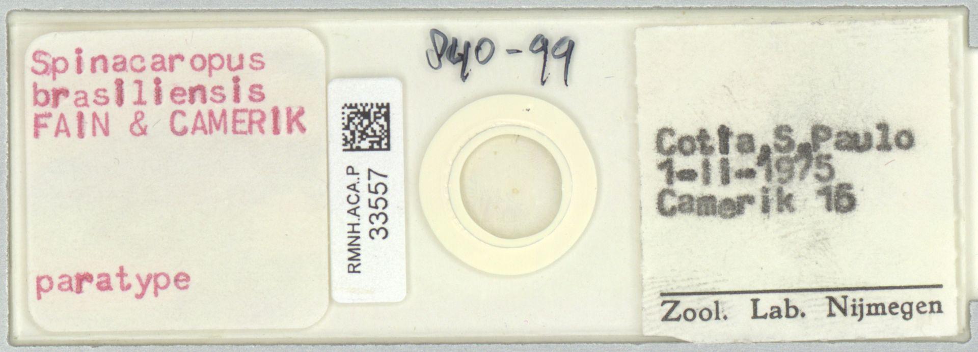 RMNH.ACA.P.33557   Spinacaropus brasiliensis Fain & Camerik
