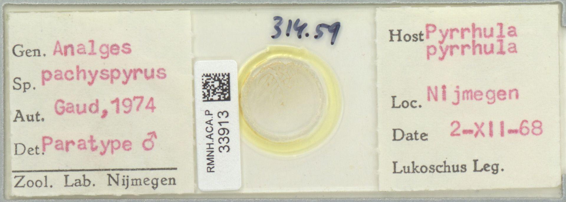 RMNH.ACA.P.33913 | Analges pachyspyrus Gaud, 1974