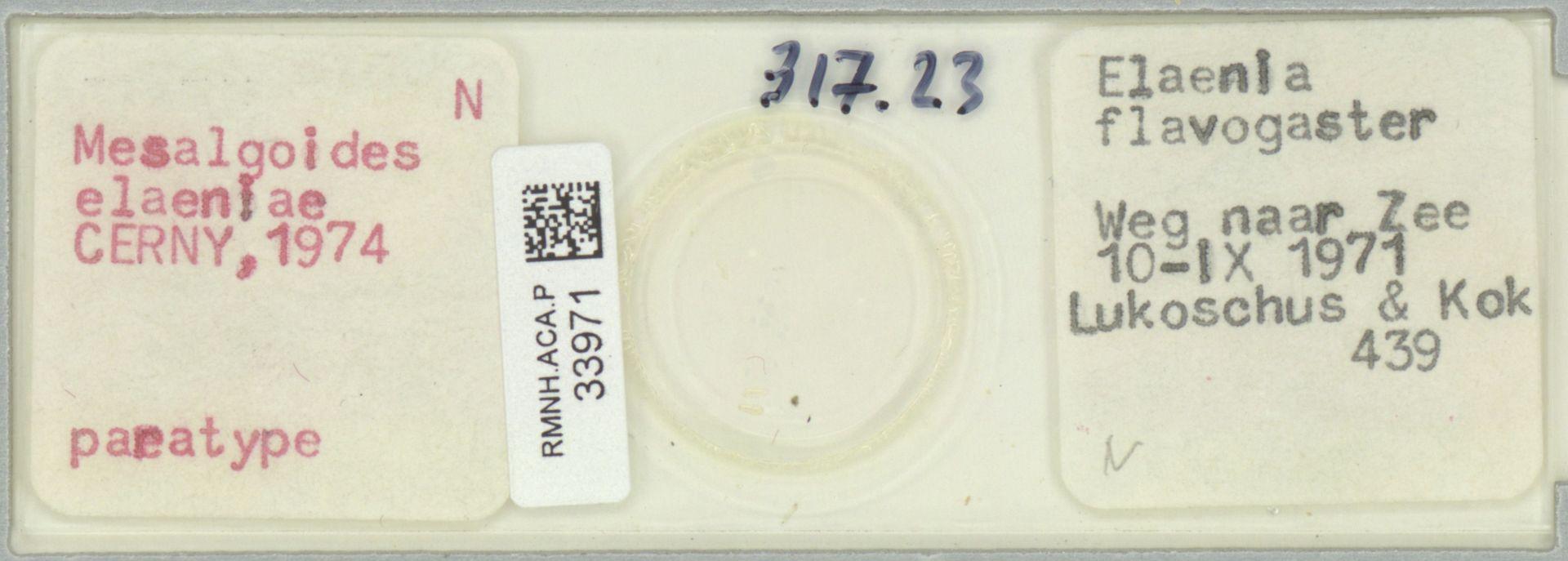 RMNH.ACA.P.33971   Mesalgoides elaeniae CERNY,1974
