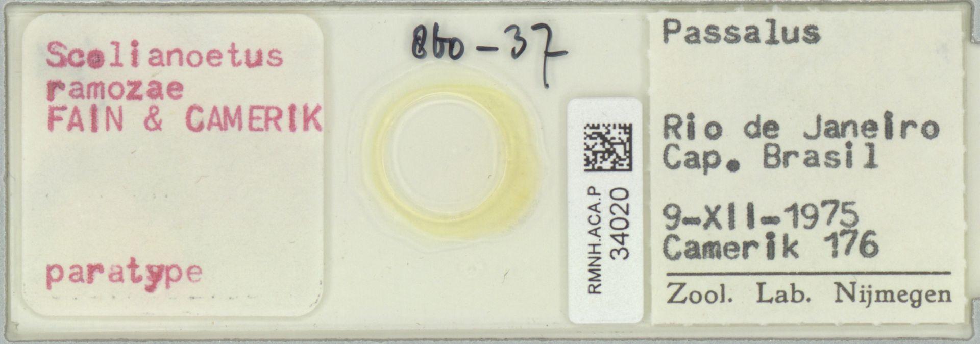 RMNH.ACA.P.34020   Scolianeotus ramozae Fain & Camerik
