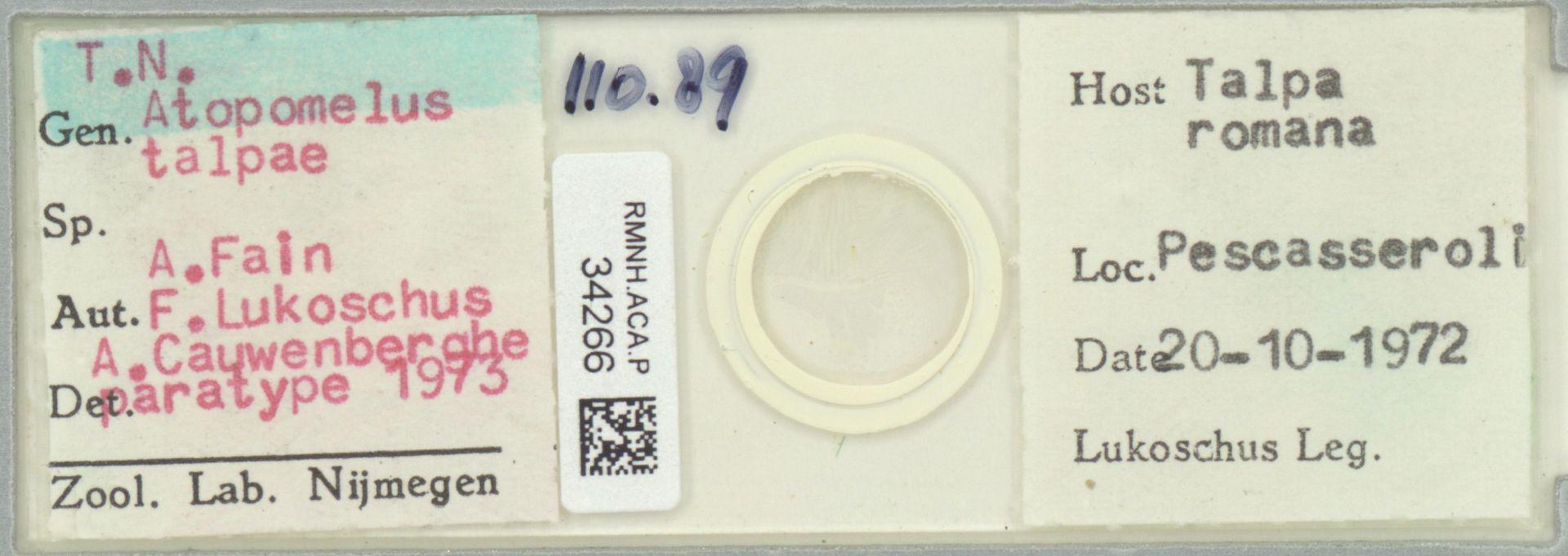 RMNH.ACA.P.34266 | Atopomelus talpae A.Fain F.Lukoschus A. Cauwenberghe 1973