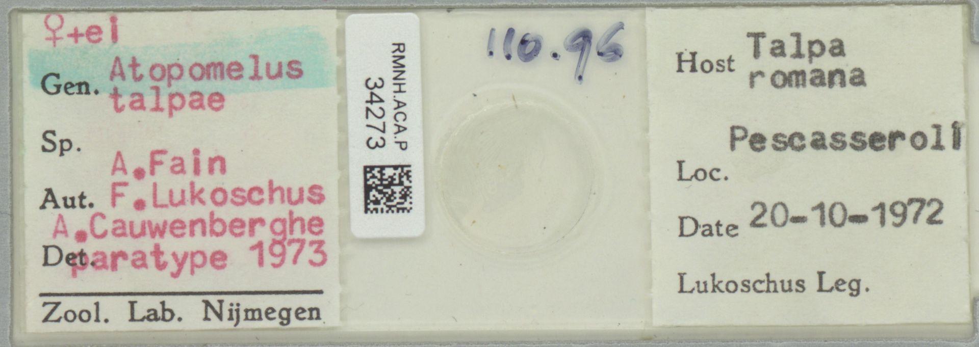 RMNH.ACA.P.34273 | Atopomelus talpae A. Fain, F. Lukoschus, A. Cauwenberghe 1973