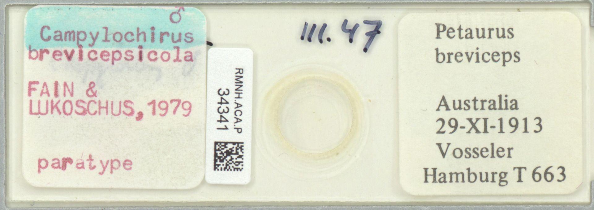 RMNH.ACA.P.34341   Campylochirus brevicepsicola Fain & Lukoschus, 1979