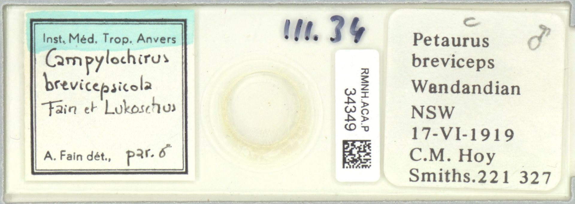 RMNH.ACA.P.34349 | Campylochirus brevicepsicola Fain et Lukoschus