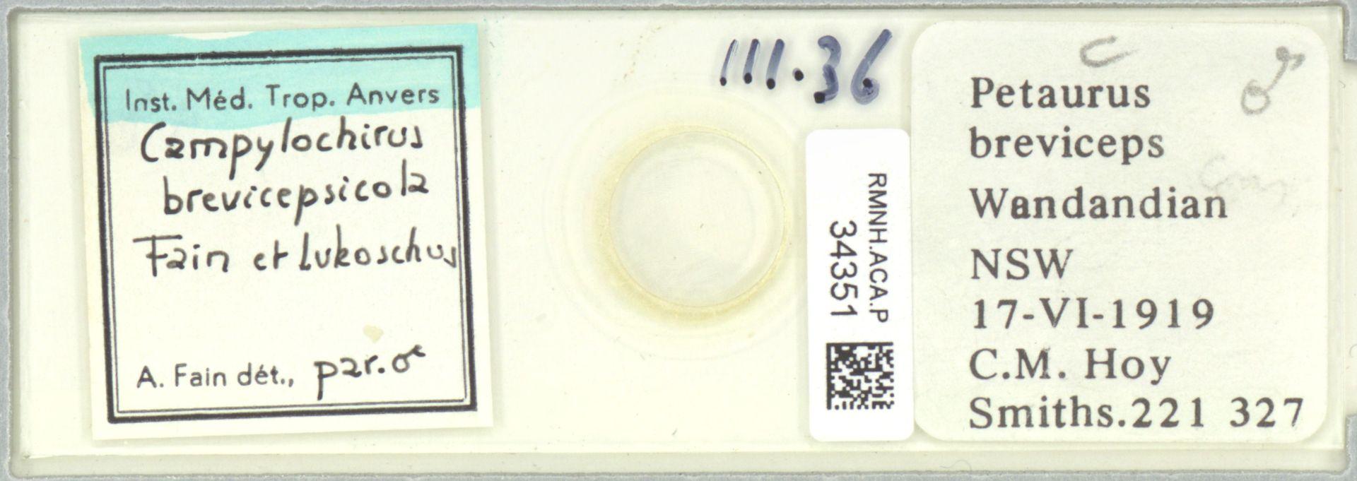 RMNH.ACA.P.34351 | Campylochirus brevicepsicola Fain et Lukoschus