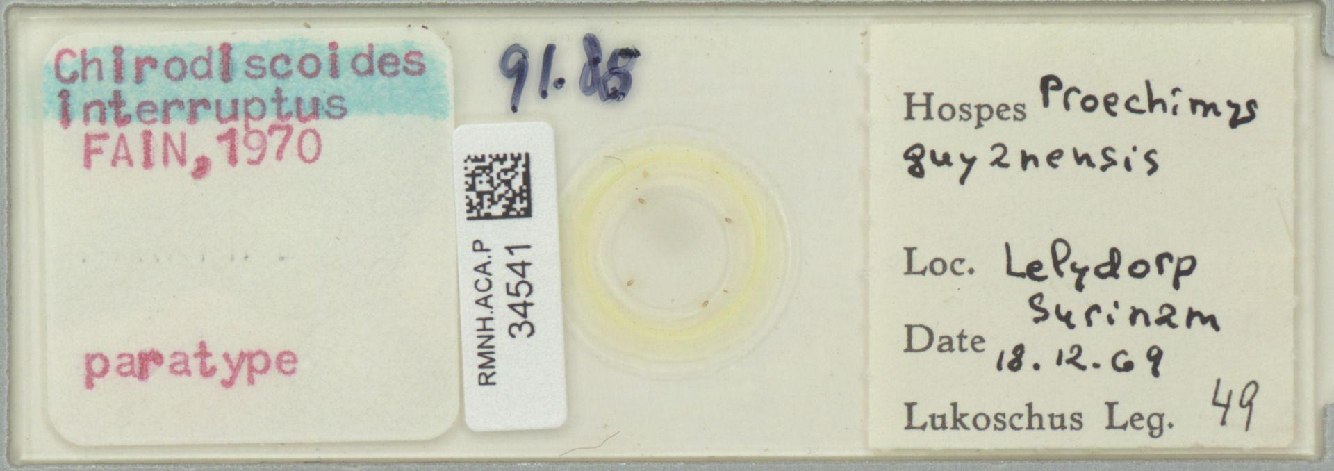 RMNH.ACA.P.34541   Chirodiscoides interruptus Fain, 1970