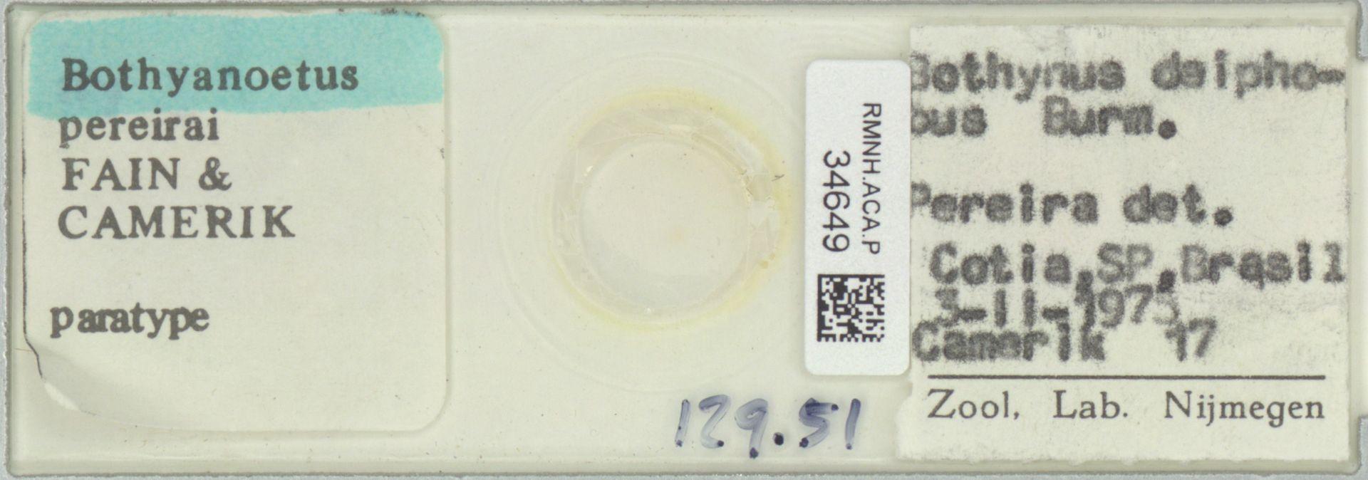 RMNH.ACA.P.34649 | Bothyanoetus pereirai Fain & Camerik