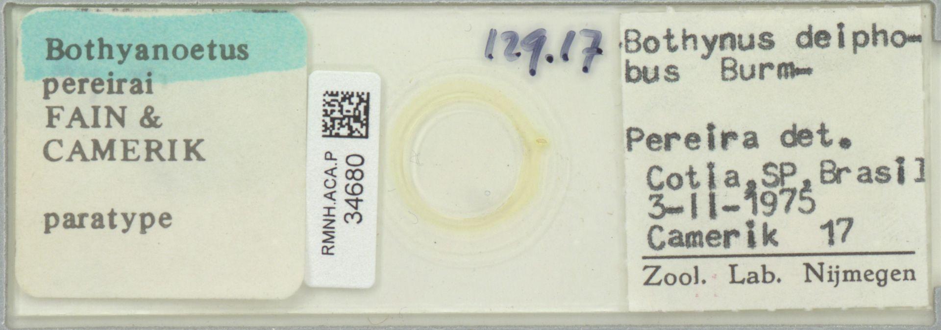 RMNH.ACA.P.34680 | Bothyanoetus pereirai Fain & Camerik