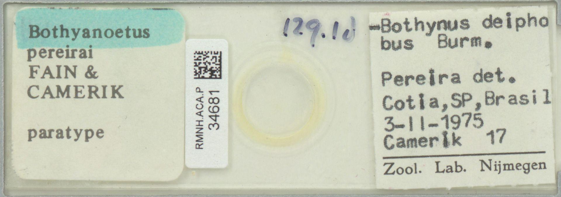 RMNH.ACA.P.34681 | Bothyanoetus pereirai Fain & Camerik
