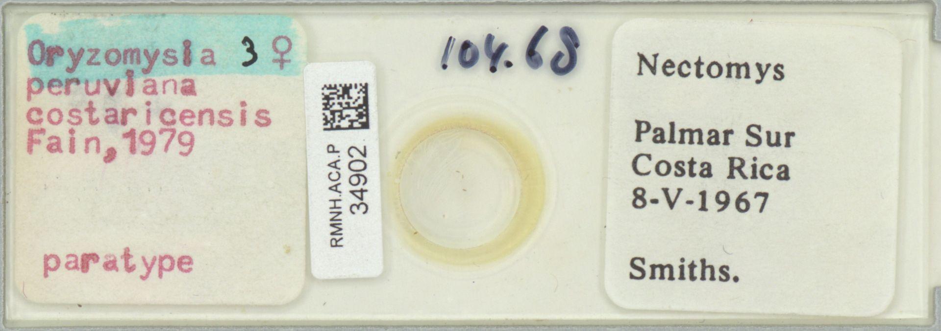 RMNH.ACA.P.34902 | Oryzomysia peruviana costaricensis Fain, 1979