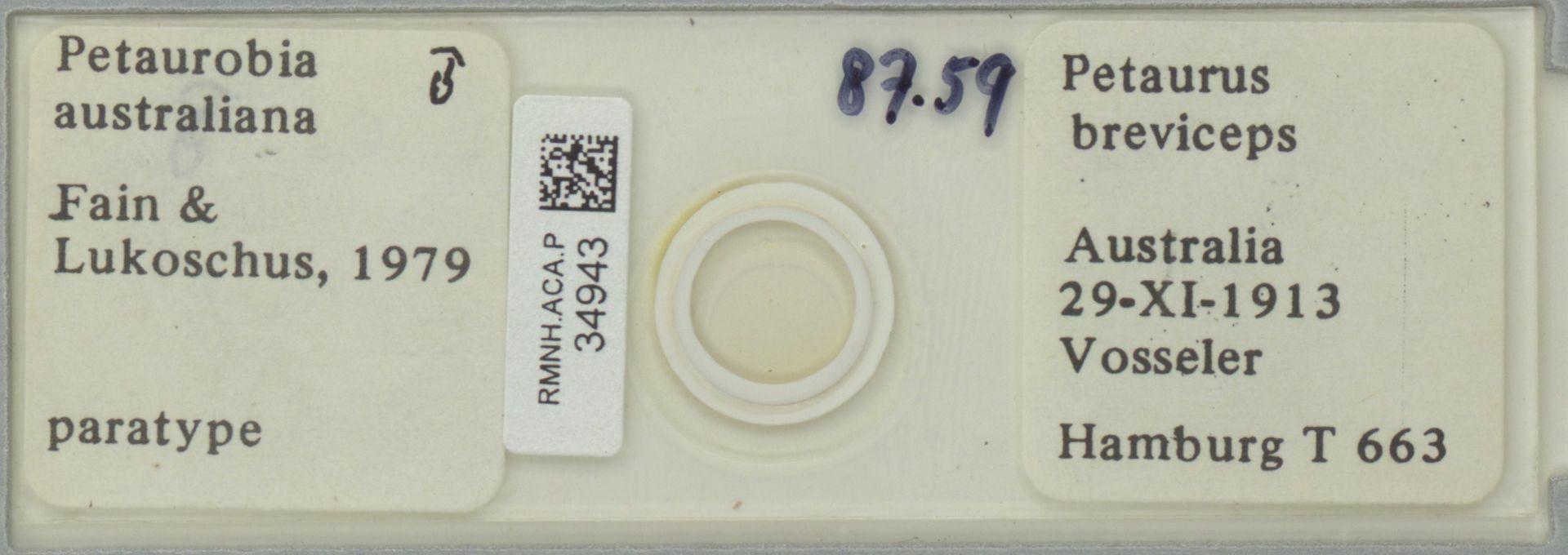 RMNH.ACA.P.34943   Petaurobia australiana Fain & Lukoschus, 1979