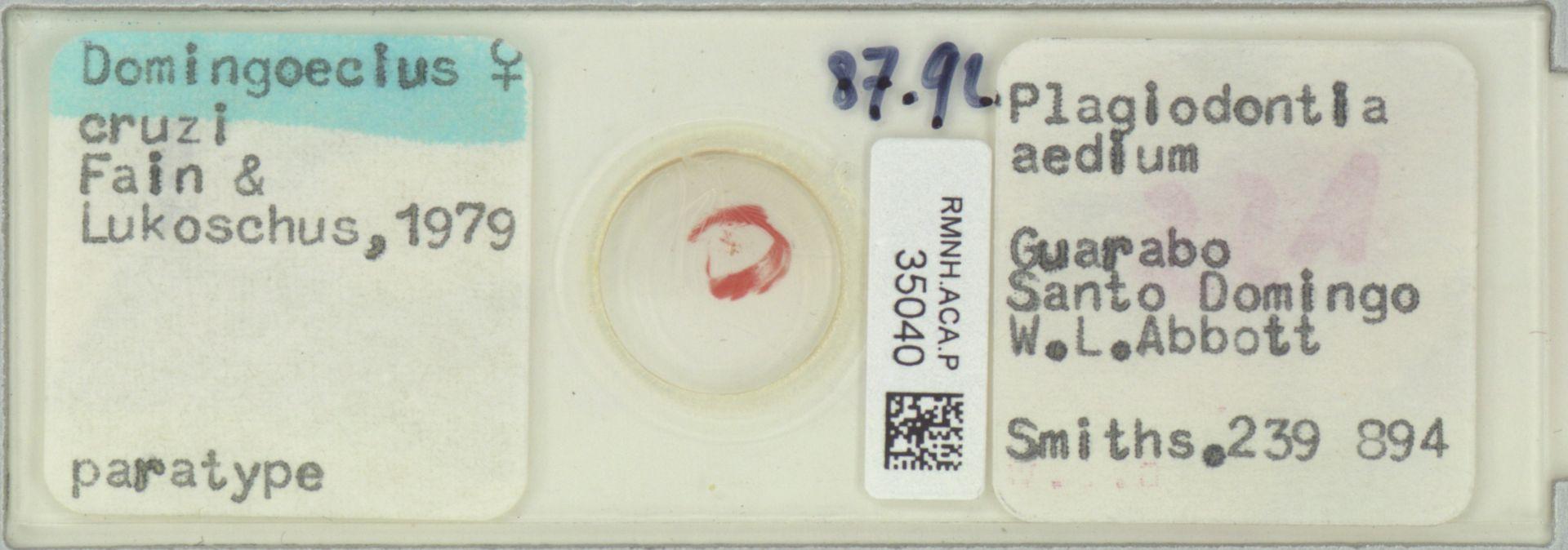 RMNH.ACA.P.35040   Domingoecius cruzi Fain, Lukoschus 1979