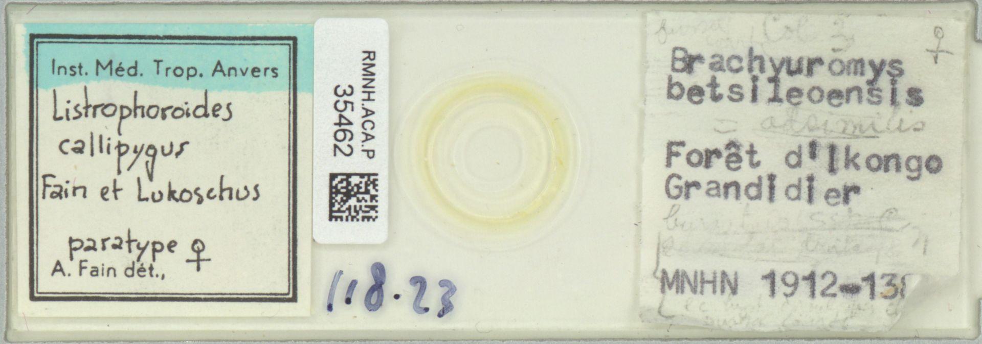 RMNH.ACA.P.35462 | Listrophoroides callipygus Fain et Lukoschus