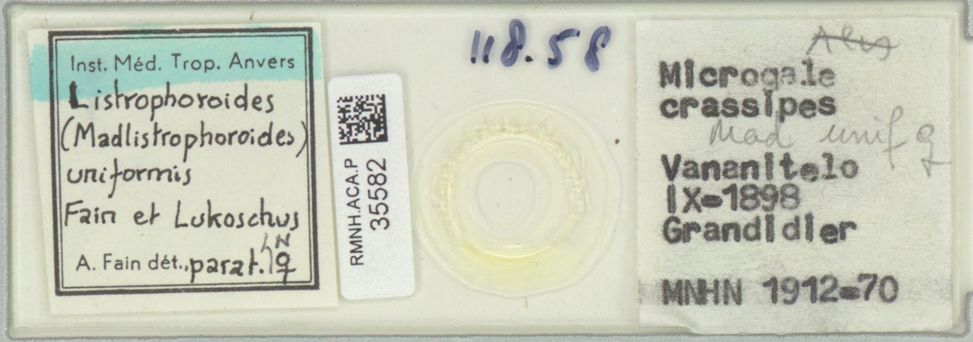 RMNH.ACA.P.35582 | Listrophoroides (Madlistrophoroides) uniformis Fain & Lukoschus