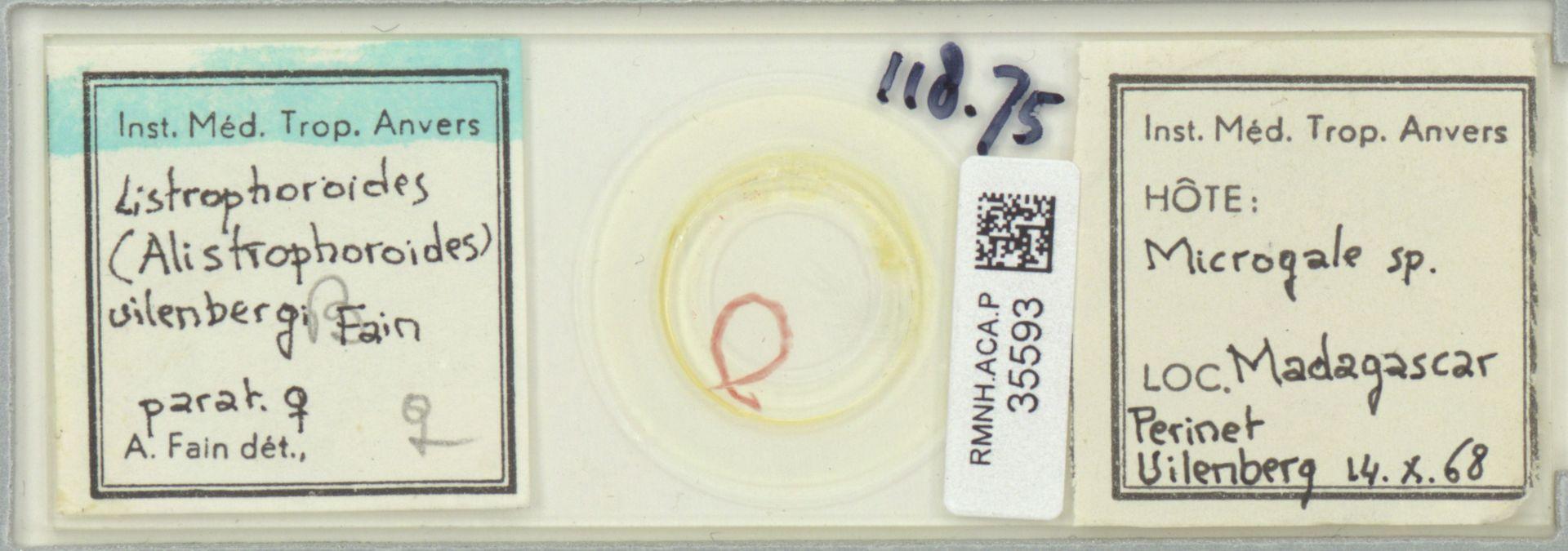 RMNH.ACA.P.35593 | Listrophoroides (Alistrophoroides) uilenbergi Fain