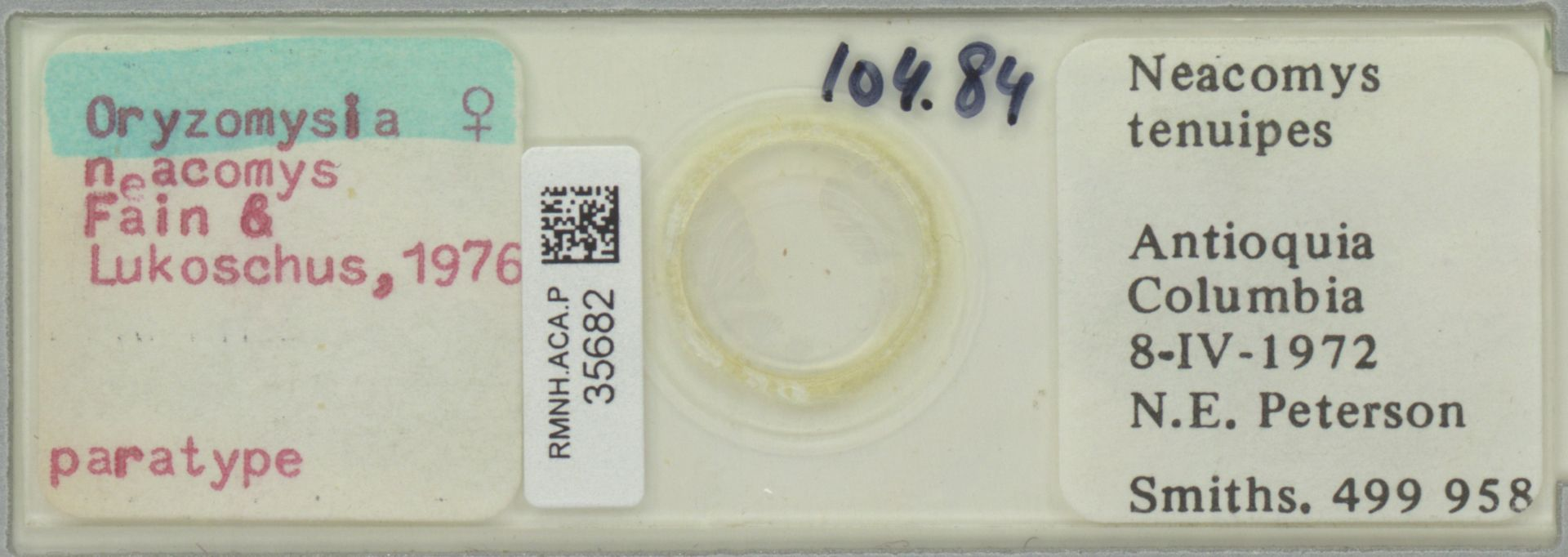 RMNH.ACA.P.35682 | Oryzomysia neacomys Fain & Lukoschus, 1976