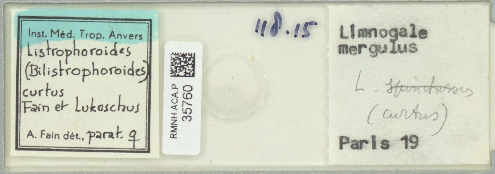 RMNH.ACA.P.35760 | Listrophoroides (Bilistrophoroides) curtus Fain et Lukoschus