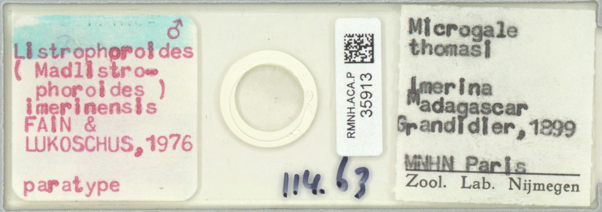 RMNH.ACA.P.35913 | Listrophoroides (Madlistrophoroides) imerinensis Fain & Lukoschus, 1976