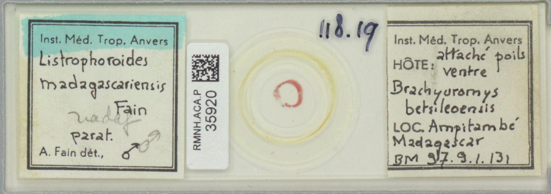 RMNH.ACA.P.35920 | Listrophoroides madagascariensis Fain